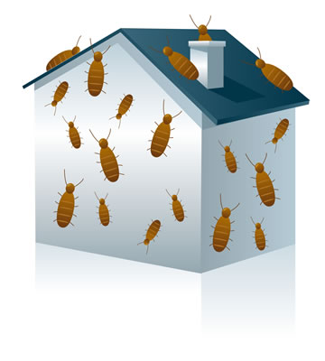 house-with-termites-needs-an-inspection