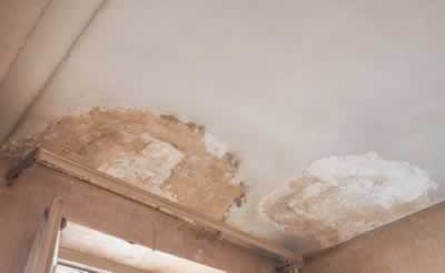 house inspection – obvious fault – damp moisture